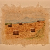 jean-pilch-Amber Field