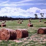 jean-pilch-Cochrane Hay Fields