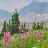 jean-pilch-Highwood Pass Fireweed