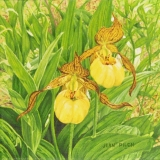 jean-pilch-Yellow Ladyslippers